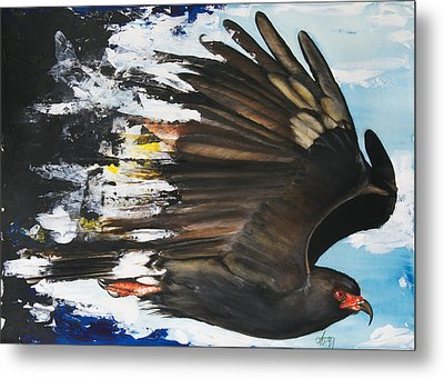 Metal Print featuring the mixed media  Everglades Snail Kite by Anthony Burks Sr