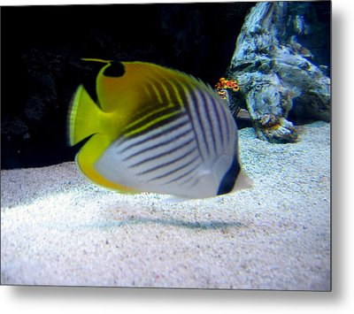 Metal Print featuring the photograph  Fish by Suhas Tavkar