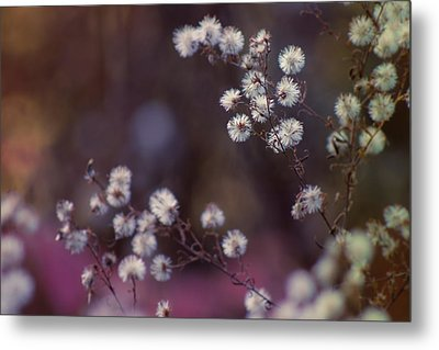 Fuzzy Fall  Metal Print by Bulik Elena