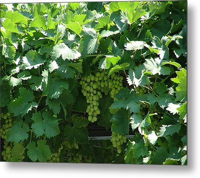 Green Grapes Metal Print by Rita Fetisov