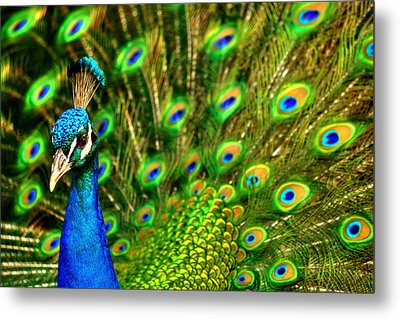 His Majesty Metal Print by Trudi Simmonds