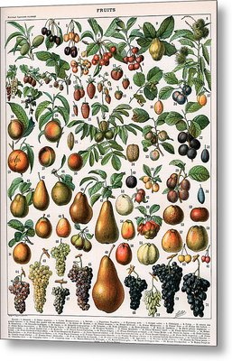 Illustration Of Fruit Varieties Metal Print by Alillot