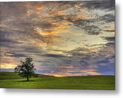 Lonley Tree Metal Print by Matt Champlin