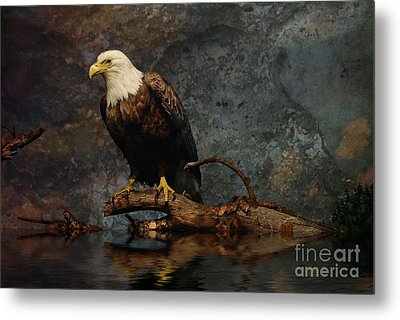 Magestic Eagle  Metal Print by Elaine Manley