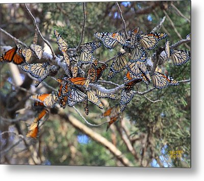 Monarch Mixed Cluster Metal Print