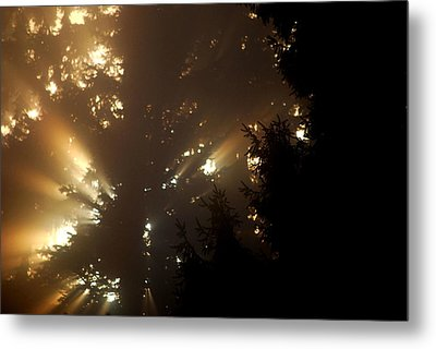 Metal Print featuring the photograph  Morning by Sergey  Nassyrov