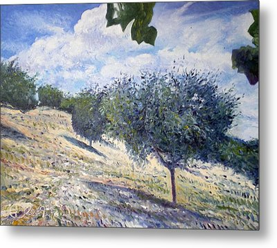 Olive Grove At Monte Cardeto Lazio Italy 2009  Metal Print by Enver Larney