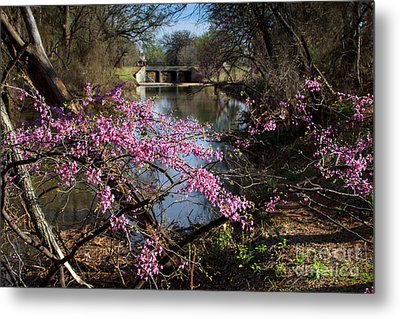 Redbuds And A Distant Bridge Metal Print