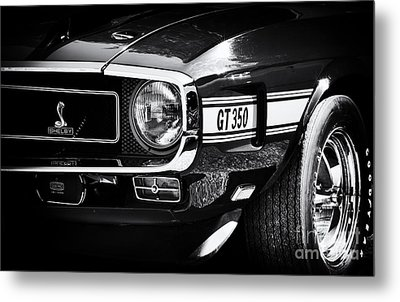 Shelby Gt350 Metal Print by Tim Gainey