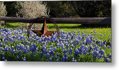Texas Bluebonnets IIi Metal Print