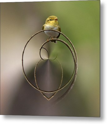Wood Warbler Metal Print by Jouko Lehto
