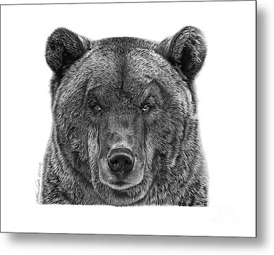 Metal Print featuring the drawing 045 Papa Bear by Abbey Noelle