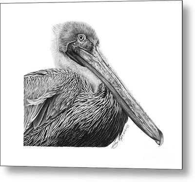 Metal Print featuring the drawing 047 - Sinbad The Pelican by Abbey Noelle