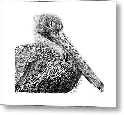 047 - Sinbad The Pelican Metal Print