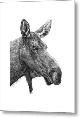 048 - Shelly The Moose Metal Print
