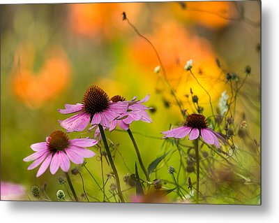 Metal Print featuring the photograph Coneflower Symphony by Mary Amerman