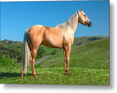 A Horse Named Shaker Metal Print by Todd Klassy