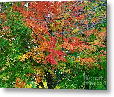 Metal Print featuring the photograph A Michigan Fall by Robert Pearson