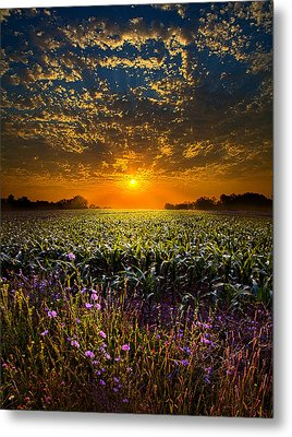 A New Day Metal Print by Phil Koch