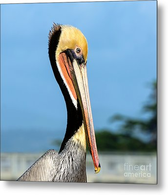 Metal Print featuring the photograph A Pelican Posing by Susan Wiedmann