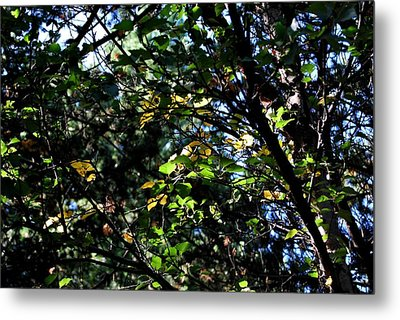 Metal Print featuring the photograph A Touch Of Autumn by Marilynne Bull