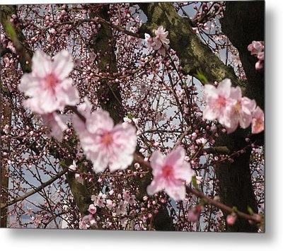 A Touch Of Pink 3 Metal Print by Susanne Awbrey