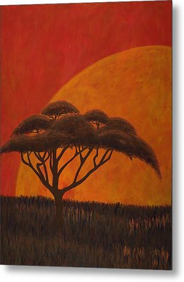 Acacia At Sunset Metal Print by Diane Korf