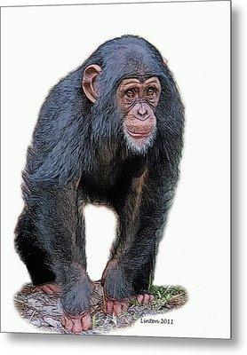 African Chimpanzee Metal Print