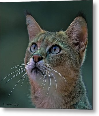 African Wild Cat Metal Print by Larry Linton