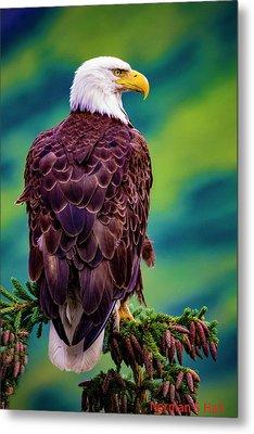 Alaska Bald Eagle Metal Print
