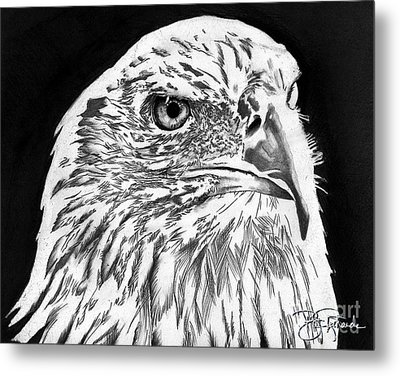 American Bald Eagle Metal Print by Bill Richards