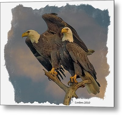 American Bald Eagle Pair Metal Print by Larry Linton