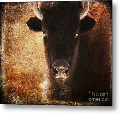 American Bison Metal Print by Olivia Hardwicke