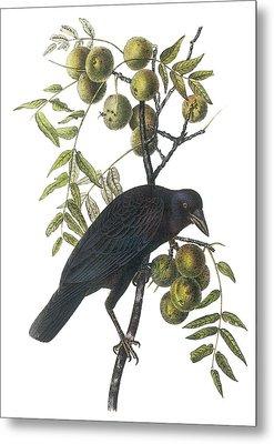 American Crow Metal Print by John James Audubon