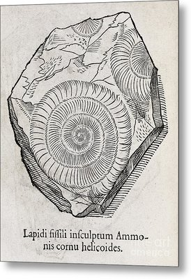 Ammonite Fossil, 16th Century Metal Print by Middle Temple Library