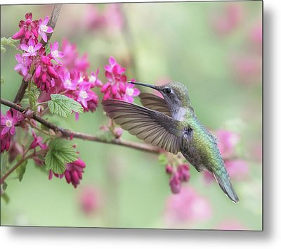Metal Print featuring the photograph Anna In Spring by Angie Vogel