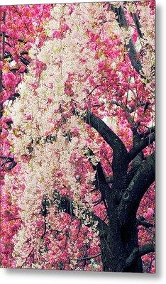 Asian Cherry Vignette Metal Print by Jessica Jenney