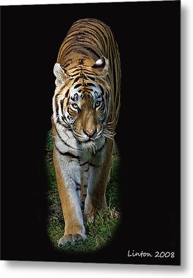 Asian Tiger Metal Print