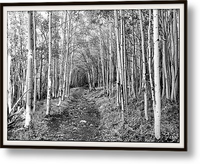Aspen Forest Metal Print by Farol Tomson