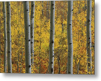 Metal Print featuring the photograph Aspen In Autumn At Mcclure Pass by Jetson Nguyen