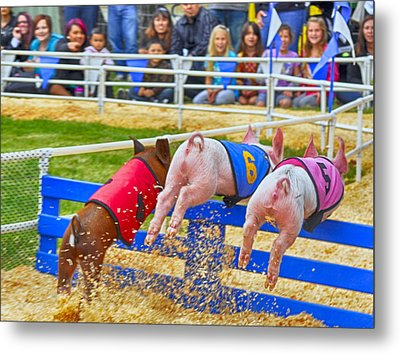 Metal Print featuring the photograph At The Pig Races by AJ Schibig