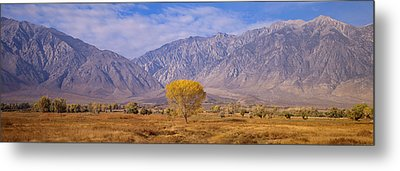 Autumn Color Along Highway 395, Sierra Metal Print by Panoramic Images