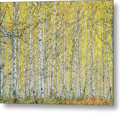 Metal Print featuring the photograph Autumn Landscape by Vladimir Kholostykh