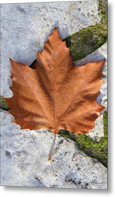 Autumn Leaf With Dewdrops Metal Print by George Atsametakis