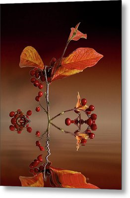 Metal Print featuring the photograph Autumn Leafs And Red Berries by David French