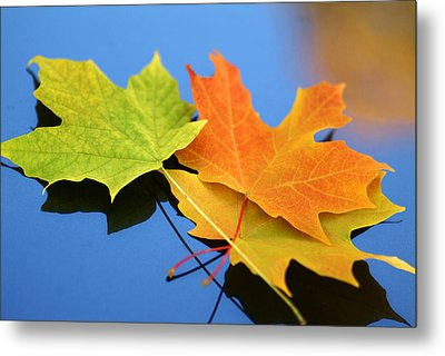 Autumn Leaves - Foliage Metal Print by Dmitriy Margolin