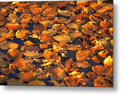 Autumn Leaves Metal Print by Michael Mogensen