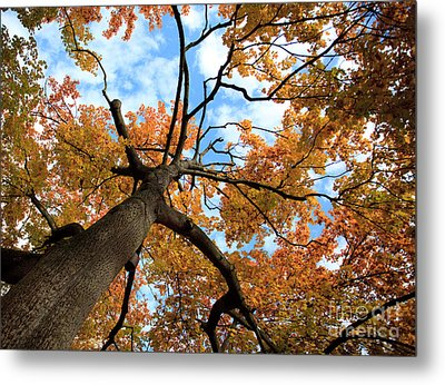Autumn Tree Metal Print by Nailia Schwarz