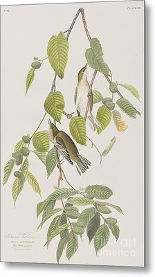 Autumnal Warbler Metal Print by John James Audubon