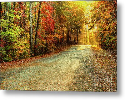 Autumns Path Metal Print by Darren Fisher